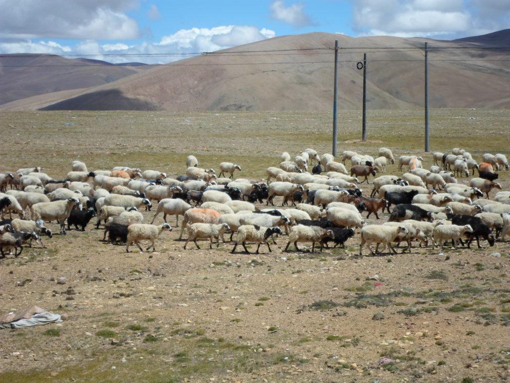 Посреди голой степи вдруг разнесся колокольный перезвон, точно такой же, как в записях «Тибетские колокола и чаши».
