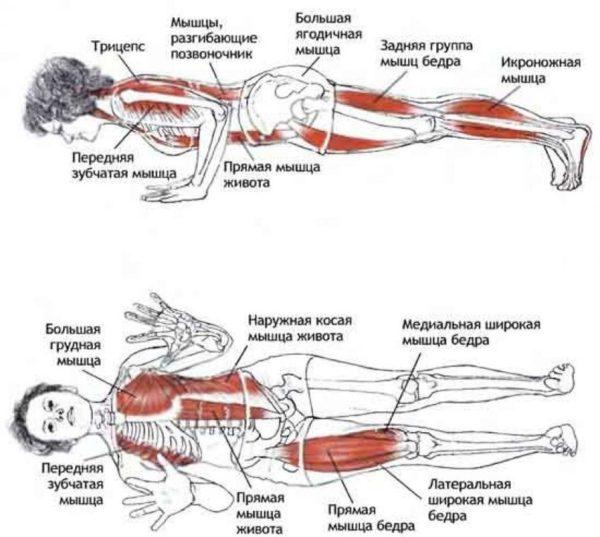 Во время статического напряжения работают глубокие мышечные слои.